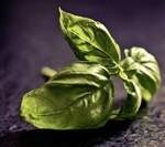 Tulsi basil leaves