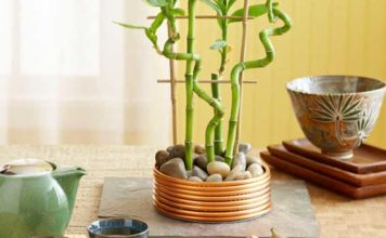 A Bright Lucky Bamboo Plant Arrangement