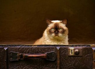 travelling-with-cats