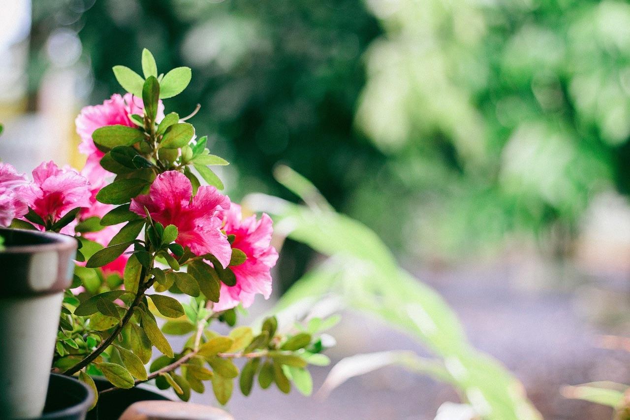 Balcony flower plant