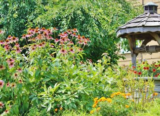 Home Garden with water well