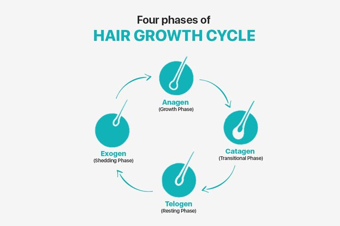Phases of hair growth cycle - A brief guide 4