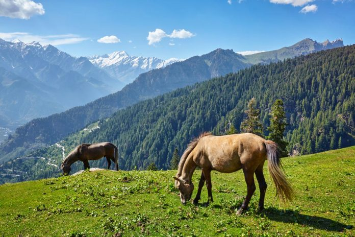 horses in mountains himachal pradesh india
