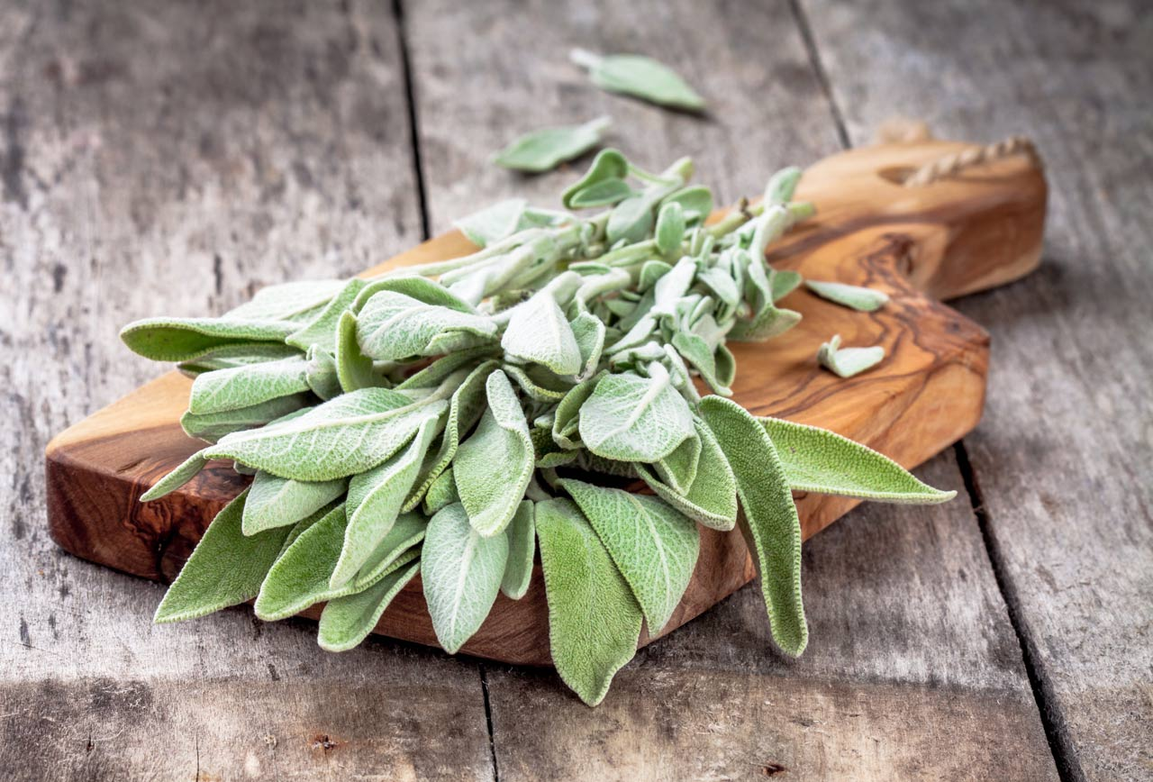 Fresh organic bundle of sage