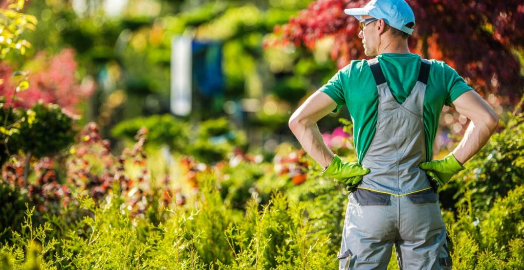 Backyard Garden Job