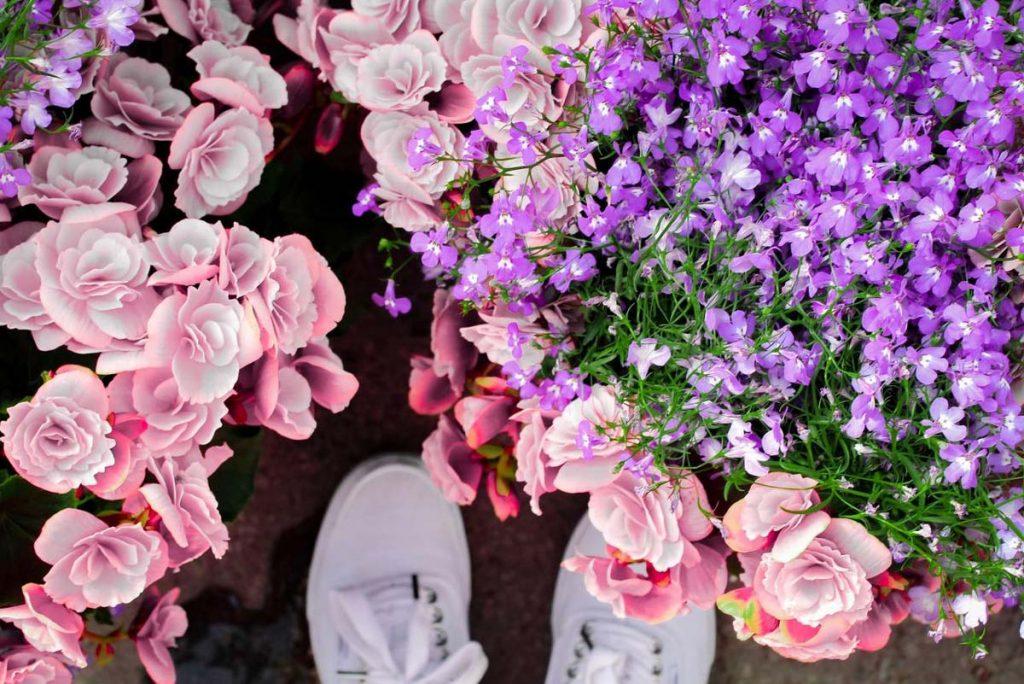 Elegant floral arrangement for gifting purpose 4